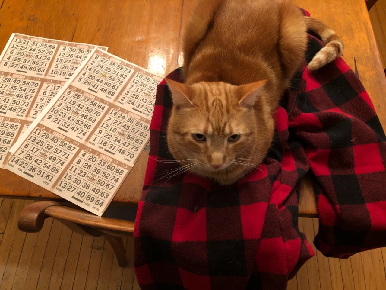 Marv the cat, getting ready to play Radio Bingo.