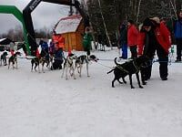 Canoe FM listener, Margo Ross at the Haliburton Forest Dogsledding Races in January 2017