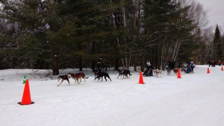 Haliburton Forest Dogsled Racing Jan 2017